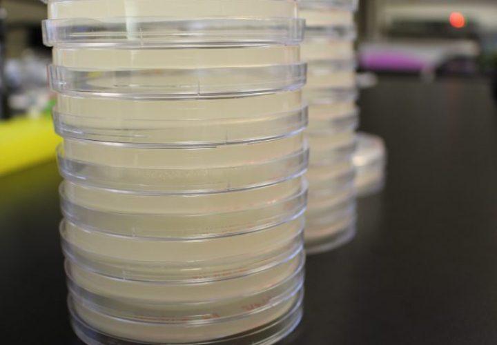 petri-dish-490-biotech